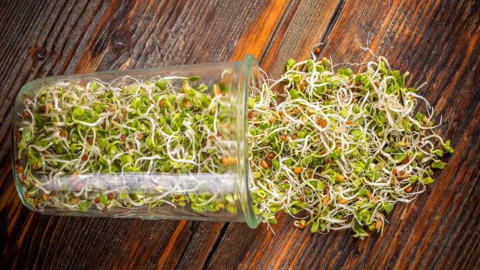 Sprouts Rude Health trend