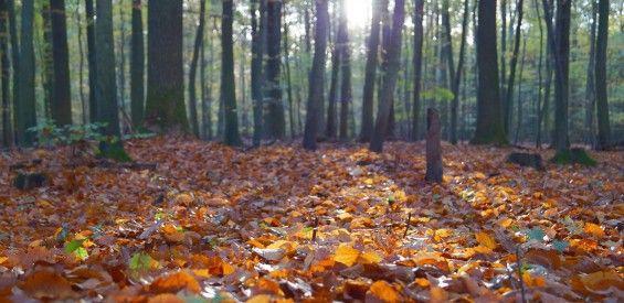 Ayurveda en de herfst: met deze 10 tips kom je er fluitend doorheen