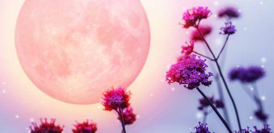 Creëer je eigen moon garden en kom dichter bij je vrouwelijke natuur