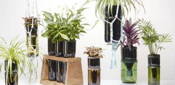 LuckyLeaves: holistische plantjes in designpot