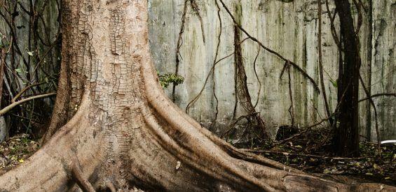 Dit is hoe de spirituele kracht van bomen jou weer in balans brengt