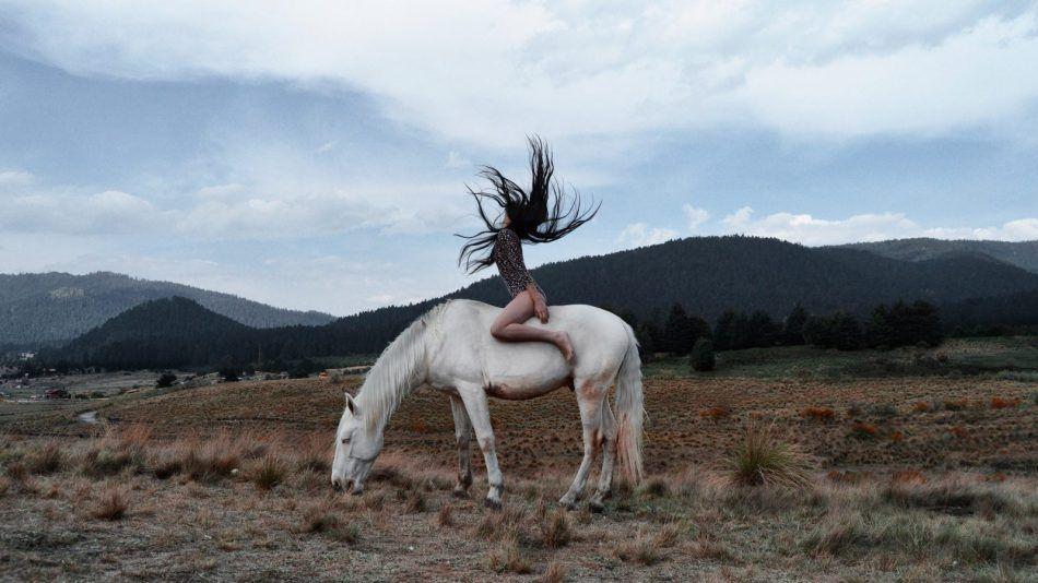 levenscoach paard