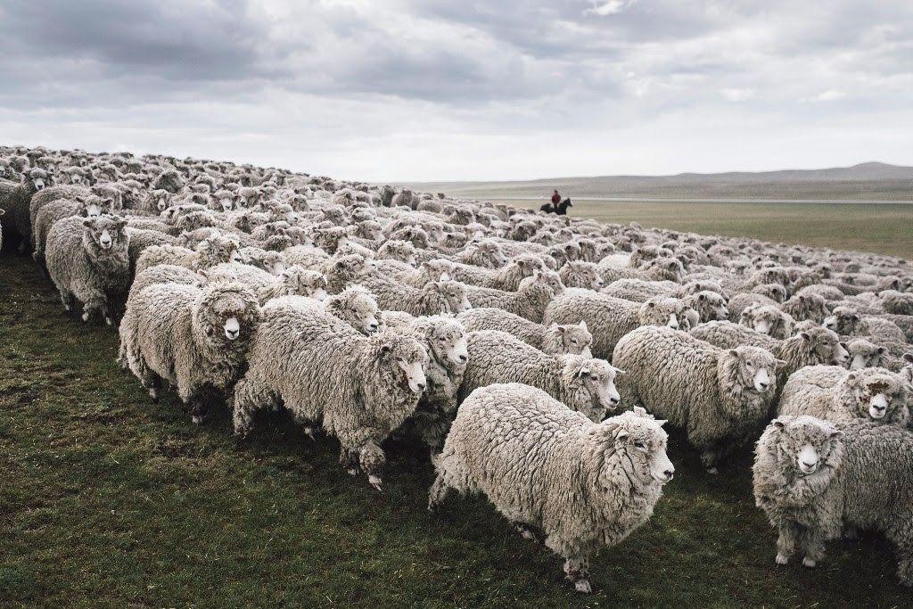 armedangels, wool organic