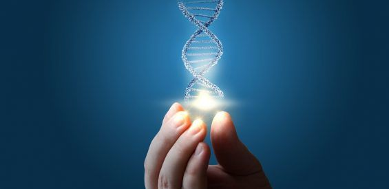epigenetische voeding