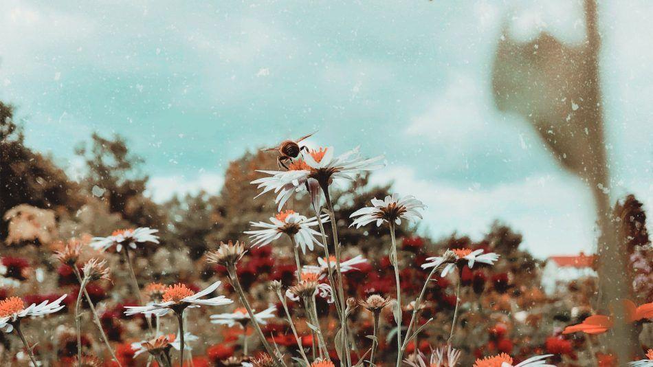 bijen, propolis, supplement