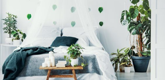 slapen, slaapkamer, planten, feng shui
