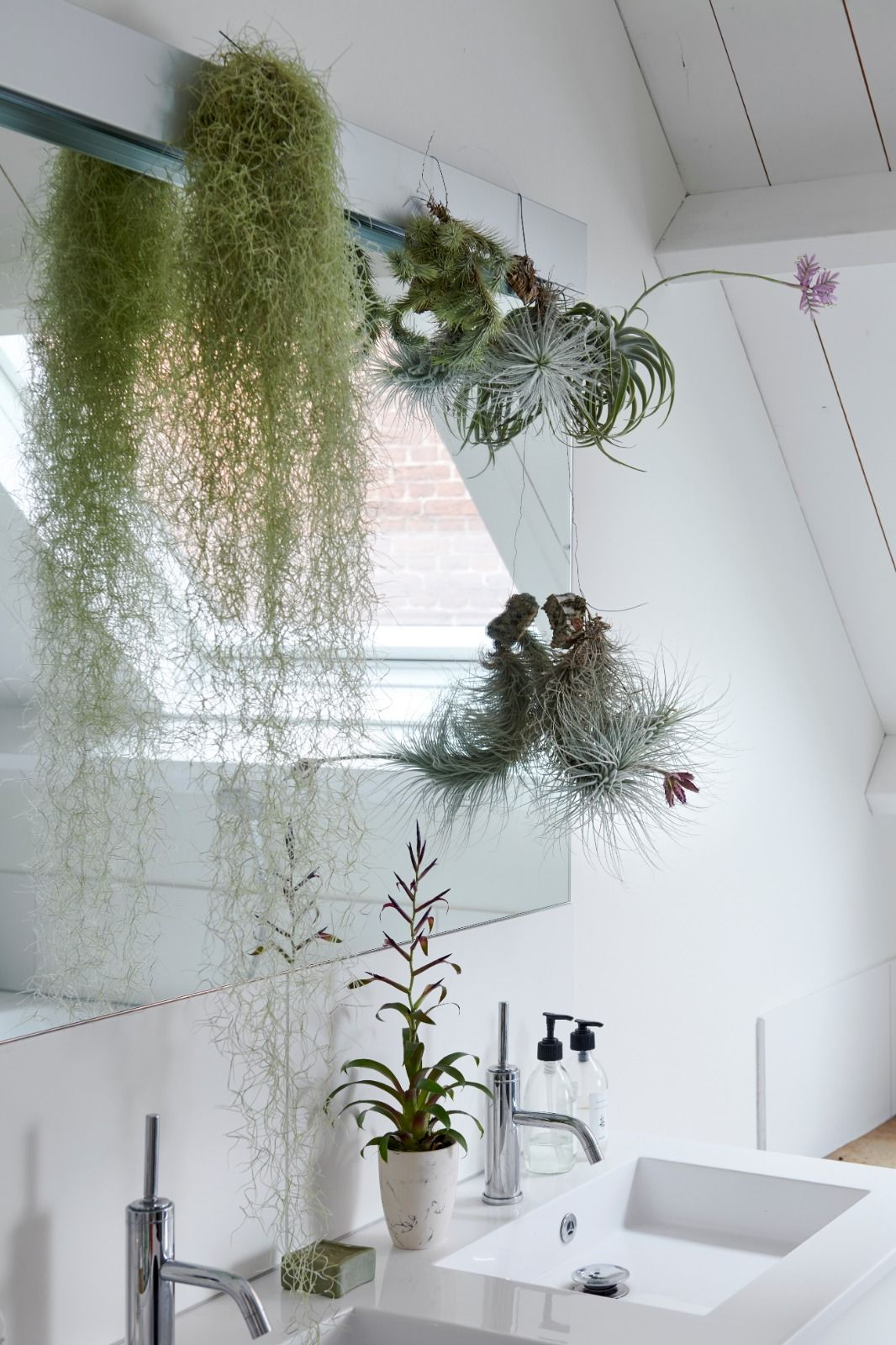 badkamerplanten, planten, gezond, zuurstof, clean living