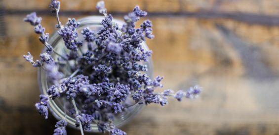 Dit is de geneeskrachtige werking van lavendel op je lichaam