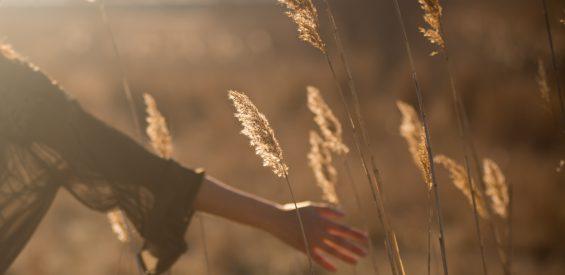 Reiki: zó bundel je universele levensenergie in je handen voor heling