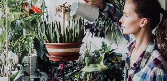 Amerikaans ecomodel legt uit: zo voer jij helende gesprekken met jouw planten