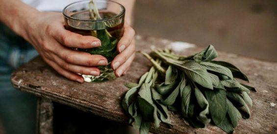 Medicinale saliethee: zo houdt 1 kop per dag jouw weerstand op peil