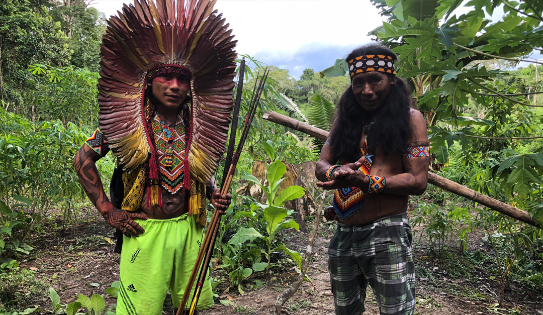 moderne jungle inheemse wijsheden, wiggert meerman