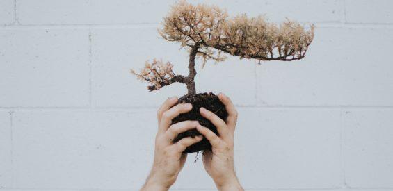 Wortelchakra: zo blijf jij goed geaard in onzekere tijden