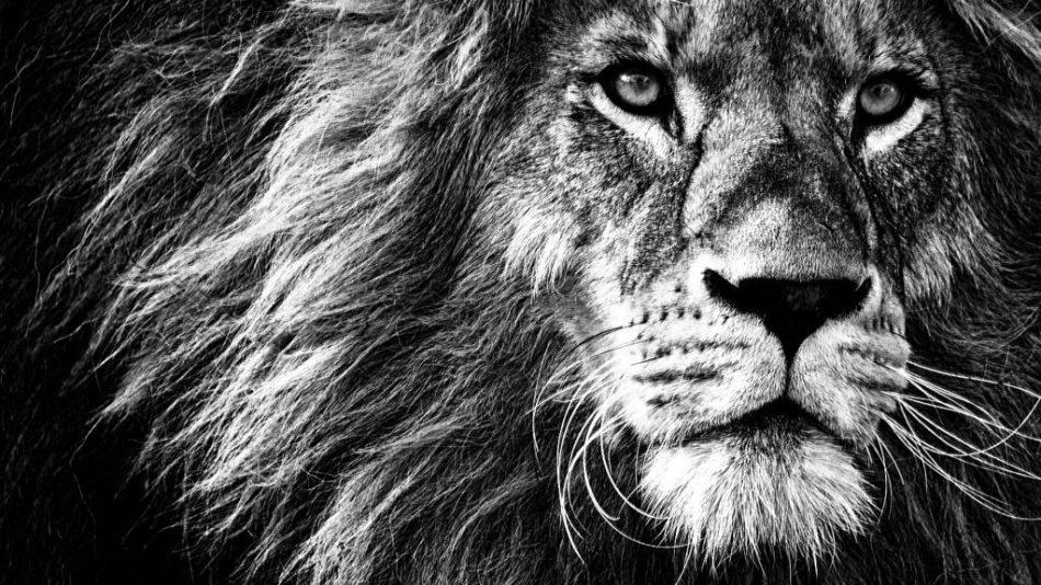 leeuwenpoort