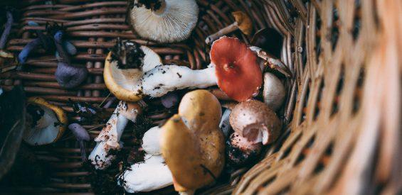 paddenstoelen medicinale werking