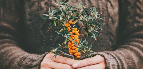 Chinese geneeskunde & de winter: 3 verwarmende tips om je gezond en geaard te voelen