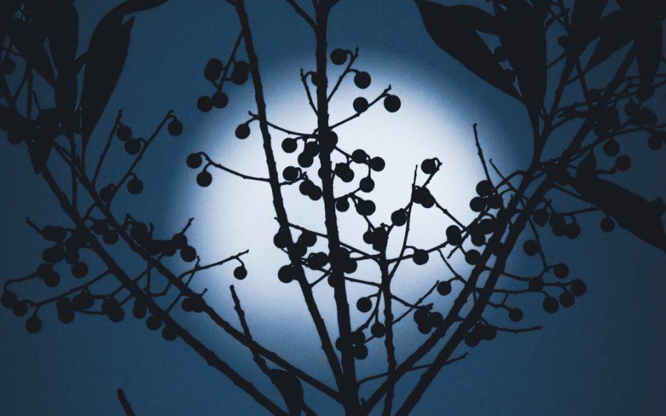 volle maan, weegschaal, jeanette groenendaal, energie, astrologie