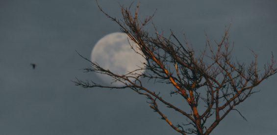 Super Maan in Schorpioen: zo bereid jij je voor op intens diepe gevoelens die zij oproept