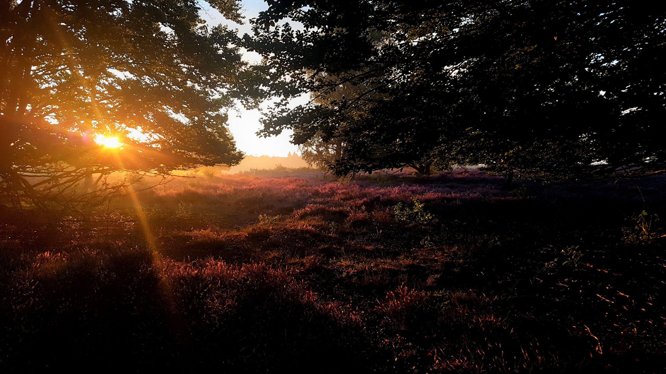 silent sunday, de hoorneboeg, stilte, innerlijke rust