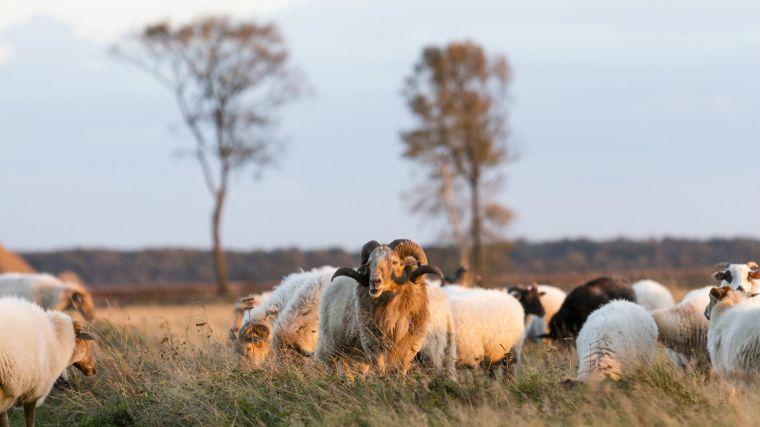 stilste gebieden nederland